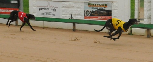 Greyhound racing betting systems that winslow money management sports betting