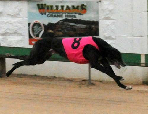 Greyhound racing betting systems that winslow kleinbettingen arlon bus schedules